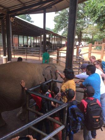Lanka Beach Holidays: Pinnawala Elephant Orphanage