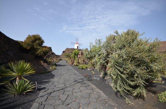 jardin de cactus jadrin de cactus