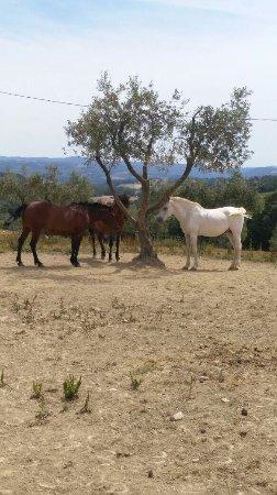 Agriturismo Il Felcino: photo1.jpg