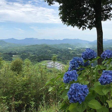 Otsuji Park Hydrangea Garden