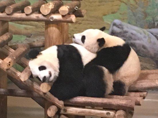 Toronto Zoo : photo0.jpg