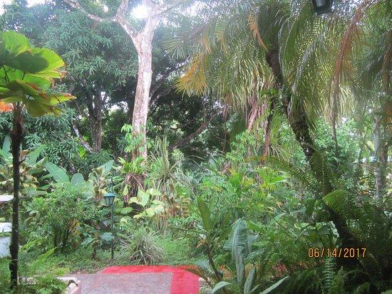 Falls Resort at Manuel Antonio Φωτογραφία