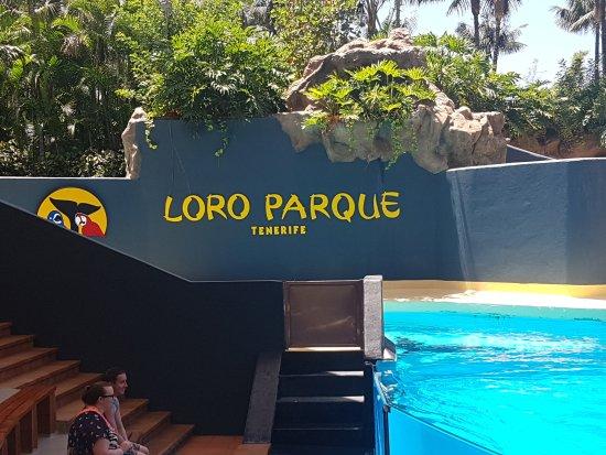 Bild von loro parque puerto de la cruz tripadvisor - Loro parque puerto de la cruz ...