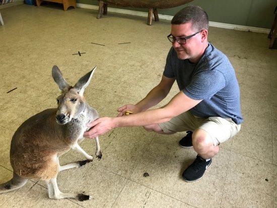 Orono, Canada: Kangaroo Visit