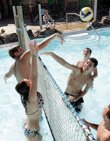 Waterloo, IA: Play some volleyball in Blue Iguana Lagoon.