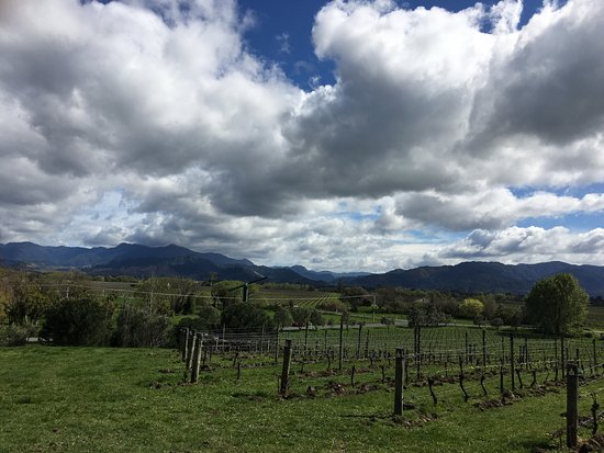 Renwick, Nueva Zelanda: Great wine and a beautiful day