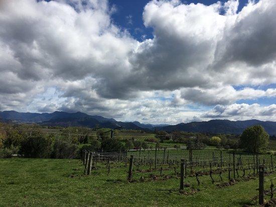 Renwick, Nuova Zelanda: Great wine and a beautiful day