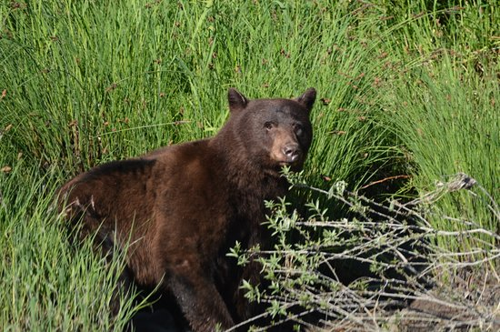Klamath River Jet Boat Tours: This bear was at the water's edge.