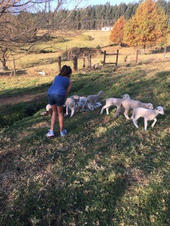 Ardmore Guest Farm: photo1.jpg