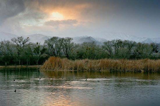 Cottonwood, AZ: Dead Horse Ranch winter