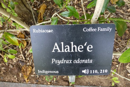 Gentil Maui Nui Botanical Gardens: Name Plate With Audio Guide Reference Numbers