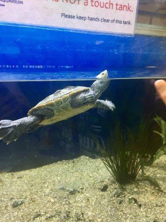 Woods Hole Science Aquarium: photo0.jpg