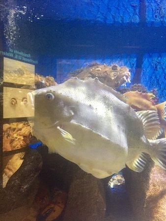 Woods Hole Science Aquarium: photo1.jpg