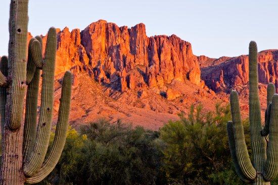 Apache Junction, AZ: Saguaro cactus and mountains