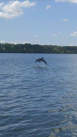 Dolphin Encounter: Screenshot_20170705-143830_large.jpg