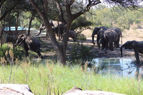 andBeyond Ngala Safari Lodge: Elephants paid a lunch time visit the waterhole but prefer drinking from the hotel swimming pool