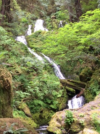 Quinault, WA: Bunch Creek Falls