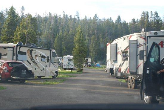 Bridge Bay Campground: BridgeBay Campground with RV's