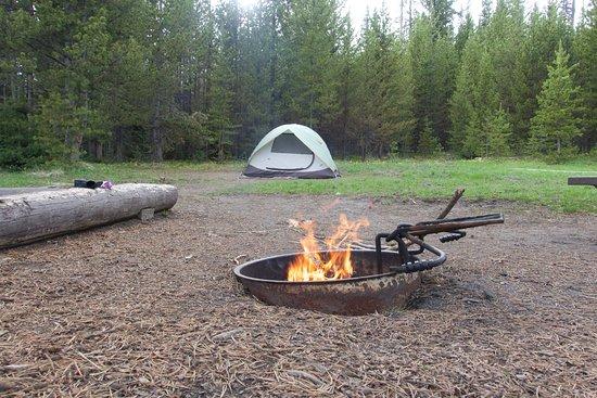 Bridge Bay Campground: Campsite closer to the trees