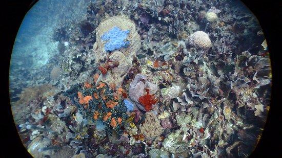 Diving Planet: photo1.jpg