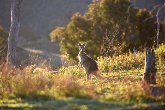 Capertee, Австралия: photo4.jpg