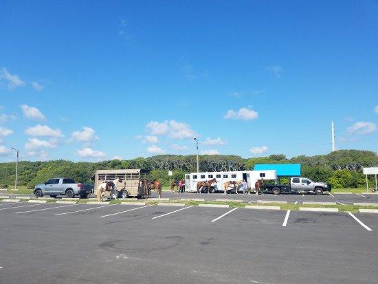 Fernandina Beach, FL: Fun morning. Wonderful guides!!!