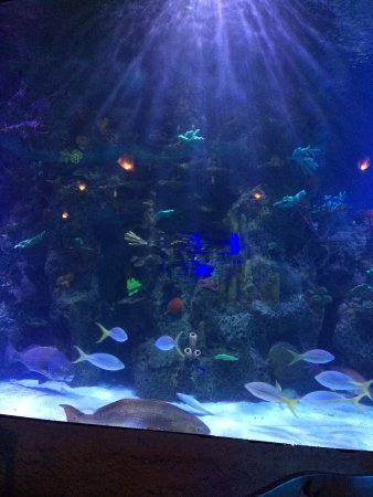 Aquarium Kemah Menu Prices Restaurant Reviews