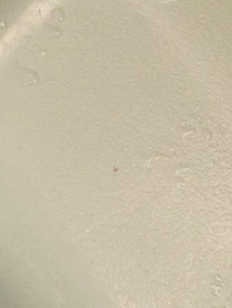 Kapaa Sands: booger in tub