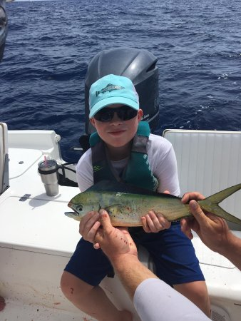 Cudjoe Key, FL: Jacob's dolphin