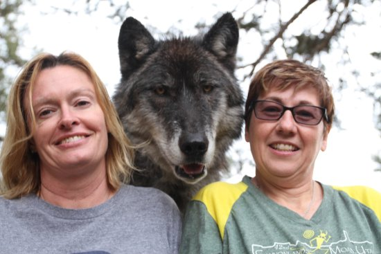 Colorado Wolf and Wildlife Center : Getting a picture with Keyni