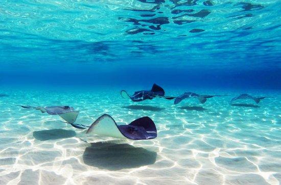 Punta Cana - Begegnung mit Haien und Stachelrochen mit dem...