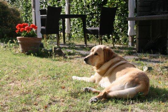 Pomaia, Italia: Mentre noi prepariamo la colazione Gianda si gode il primo sole in giardino