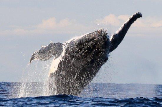 Manly Ocean Adventures: photo1.jpg
