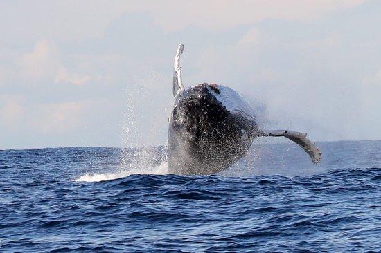 Manly Ocean Adventures: photo2.jpg