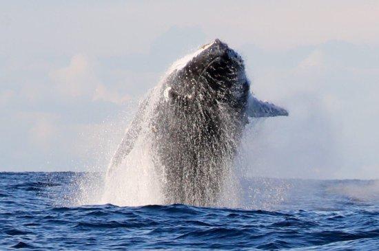 Manly Ocean Adventures: photo3.jpg