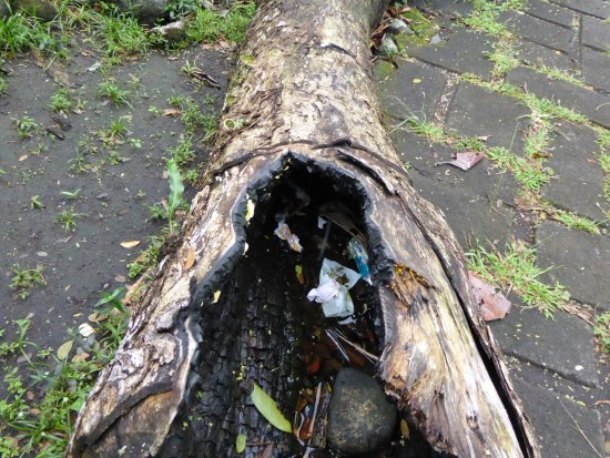 Cagsawa Ruins Park: Burnt tree