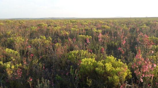 Bontebok National Park: 20170706_165333_large.jpg