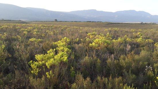 Bontebok National Park: 20170706_164751_large.jpg