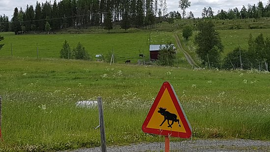 Orrviken, Sweden: 20170706_100227_large.jpg