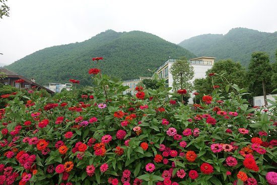 Mianzhu, Chine : Flowers and spa in background