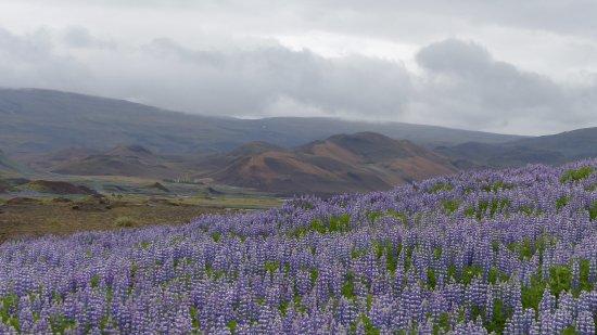 Svartsengi, Islande : panorama lungo la strada sterrata