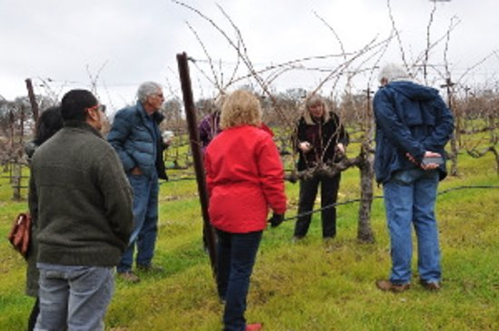 Amador City, Kalifornia: Corinne teaching a vine pruning class