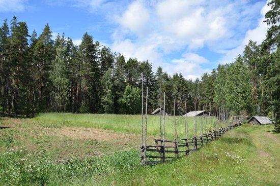 Liesjarvi, فنلندا: Koppel mit Tieren