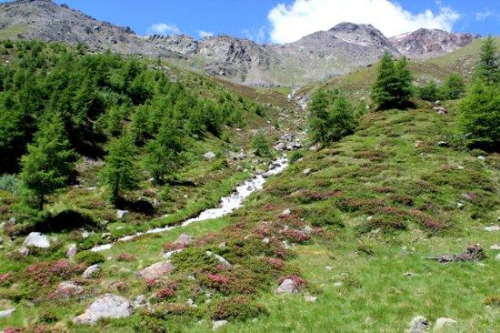 Peio, Italia: la valle degli oleandri