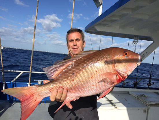 Jupiter, FL: MUTTON SNAPPER