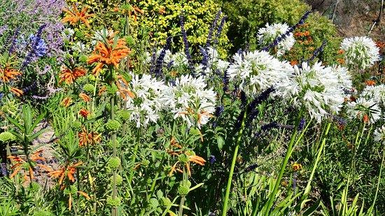 Atrio: Gartenanlage
