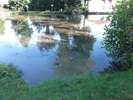 Sennece-les-Macon, Prancis: étang derrière l 'hôtel.