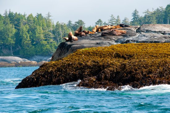 Port Hardy, Canadá: Scenic Boat and Wildlife Tour