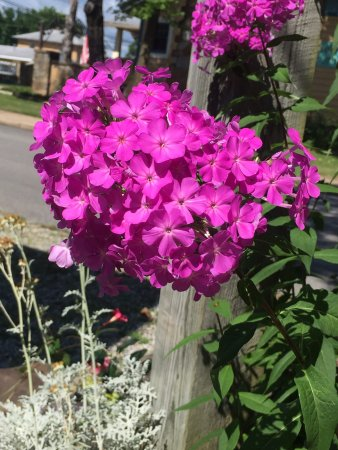 Wildflower Bed and Breakfast-On the Square: photo2.jpg