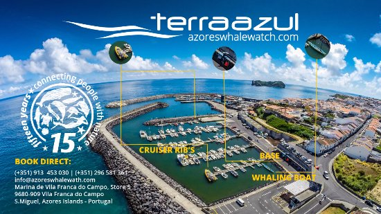 Azores Whale Watching Terra Azul: Azores Whale Watching